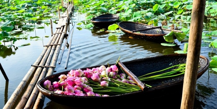 vietnam-beauty-via-lotus-flower-lakes-in-the-whole-country-part-1-1